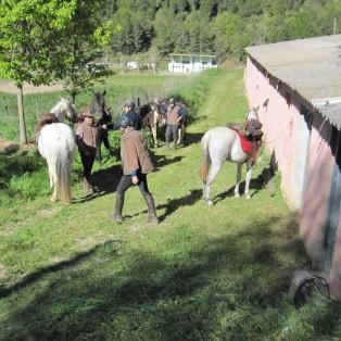 cavalls-a-les-quadres